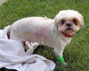 teesha wounded