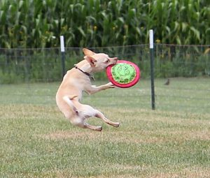 zin-catching-a-frisbee-1