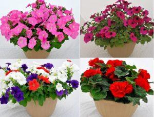 2019 Spring Plant Sale @ Online Ordering
