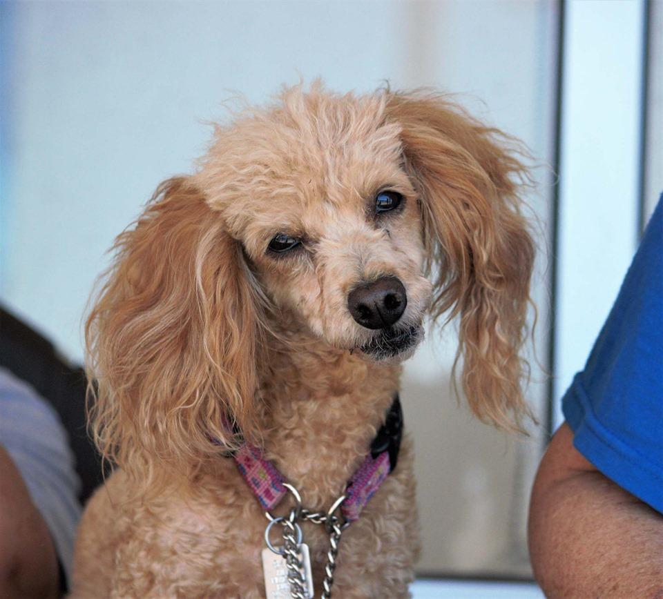 Animal Placement Bureau | A non-profit dog rescue